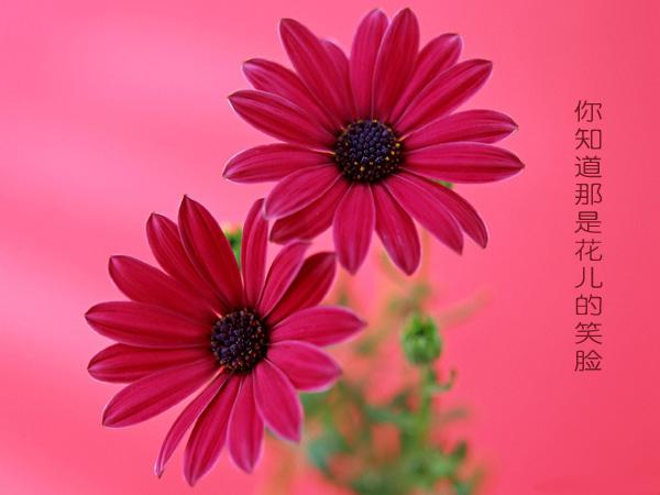 赏 花 - 戈壁红柳 - 戈壁红柳的博客