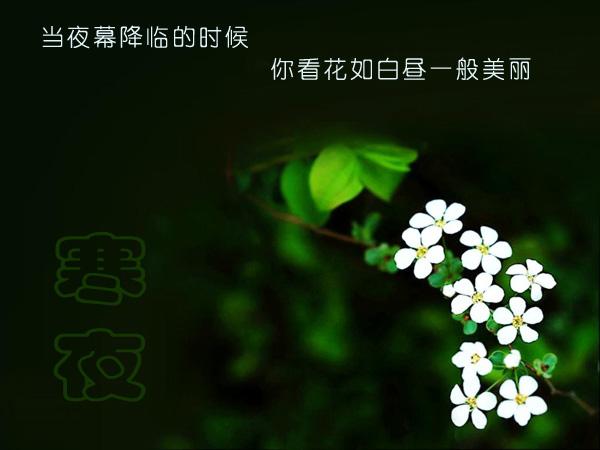 花落花开 - 日月星辰 -             日月星辰
