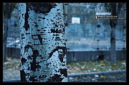[原创] 暖  雪 - rx0818 /  蓝鸟许多 - 时空中消逝的影子,在记忆中寻回