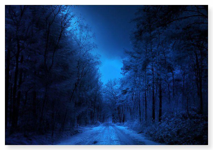 蓝色精灵【景物素材图片】 - 寒烟的博客 -