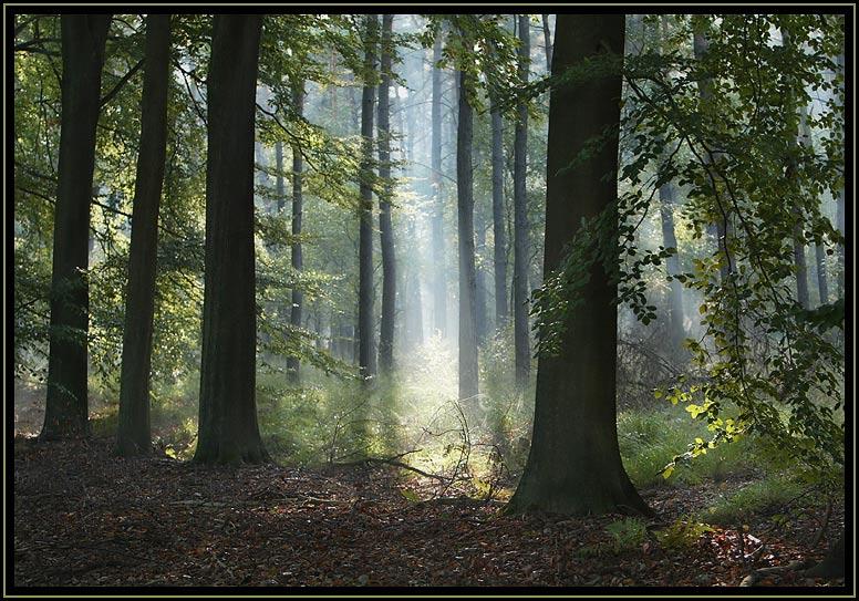 【贴图】森林深处的一束光   - 中原风云 - 中原劳务网